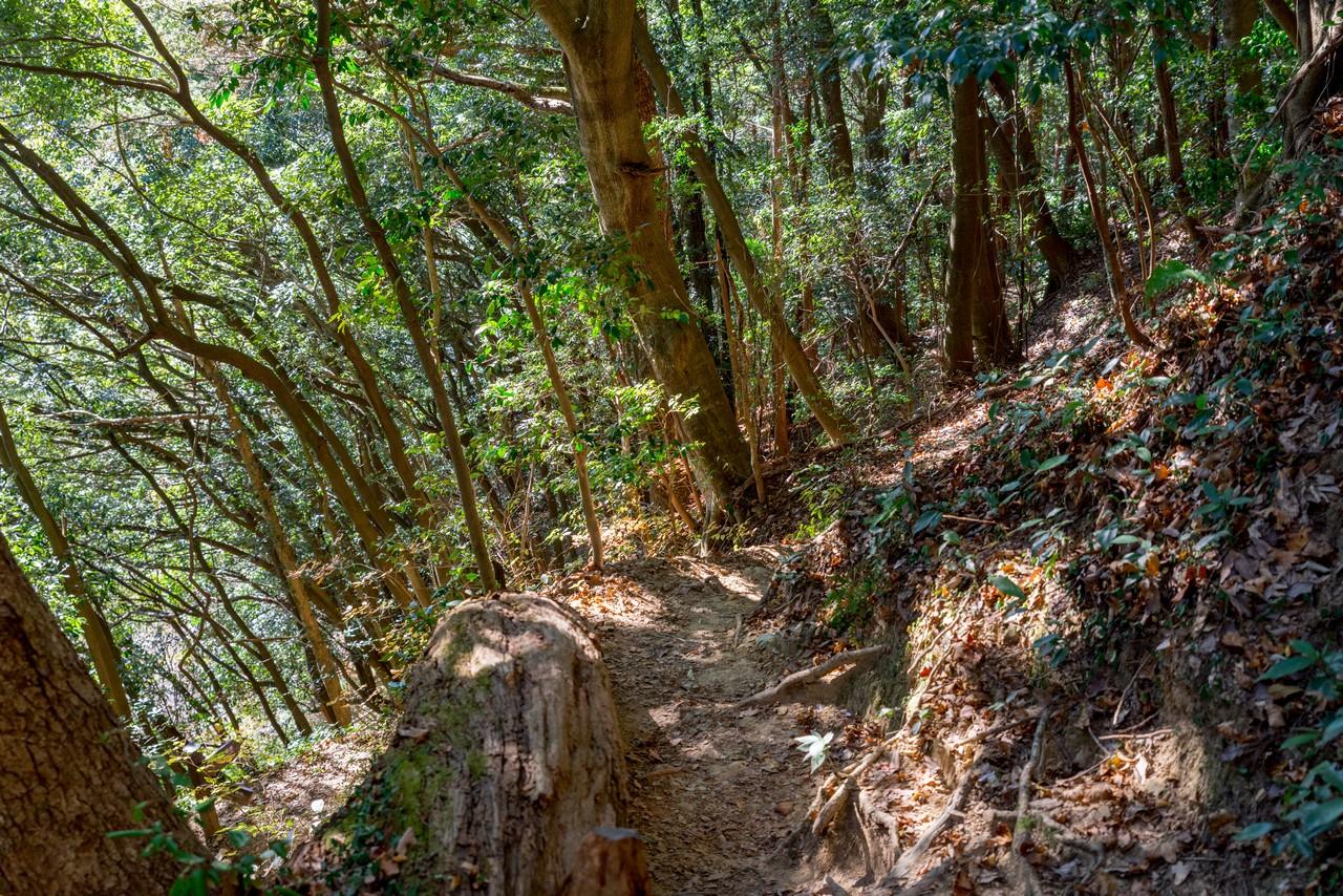 201223北高尾山稜-046