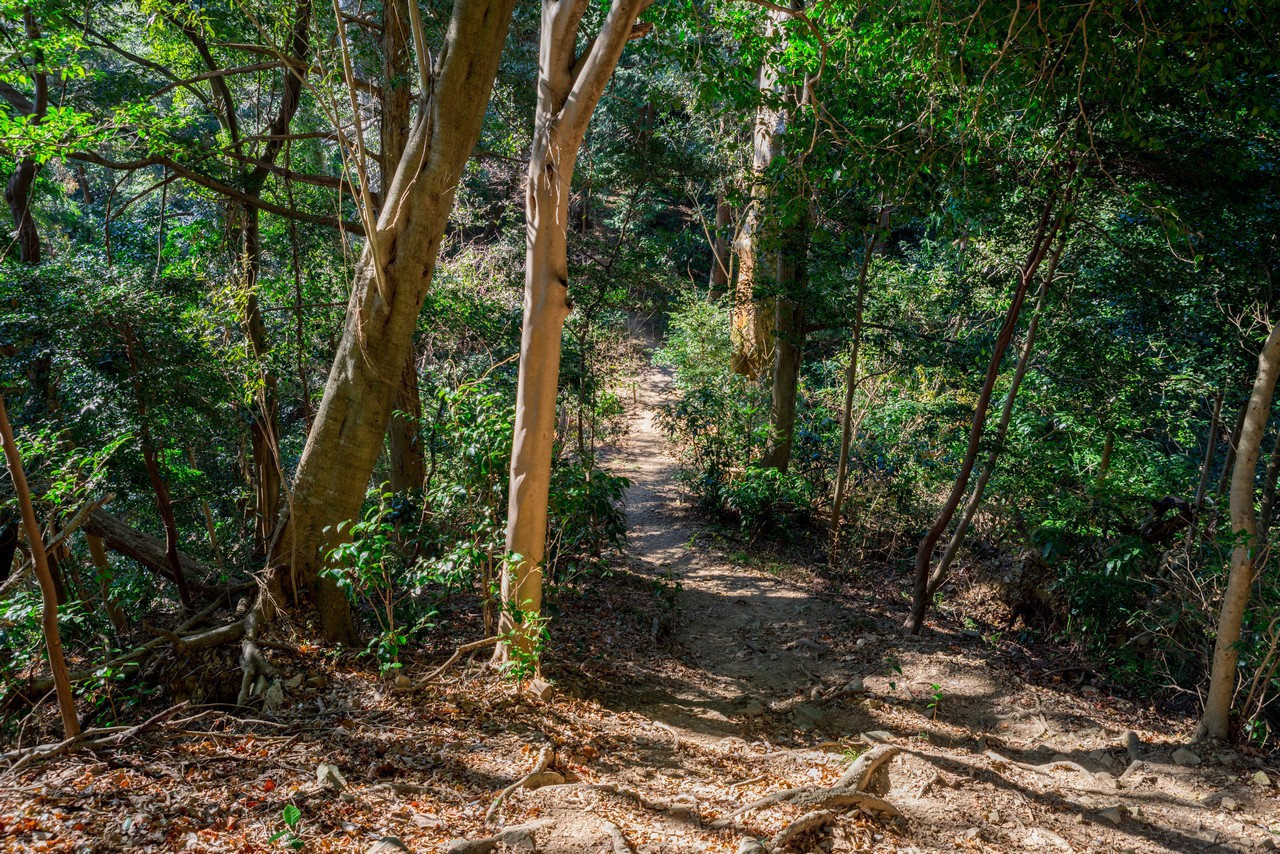 201223北高尾山稜-049