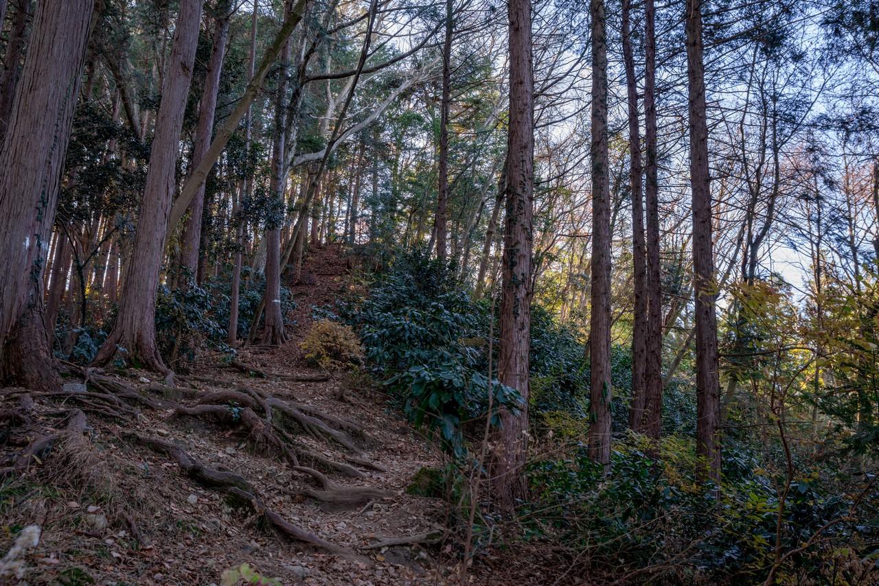 201223北高尾山稜-050