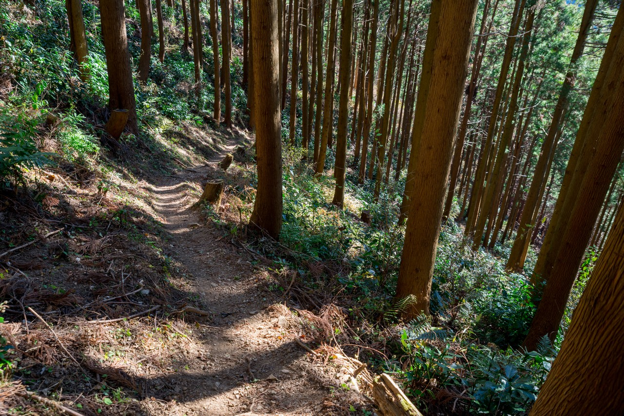 201223北高尾山稜-061