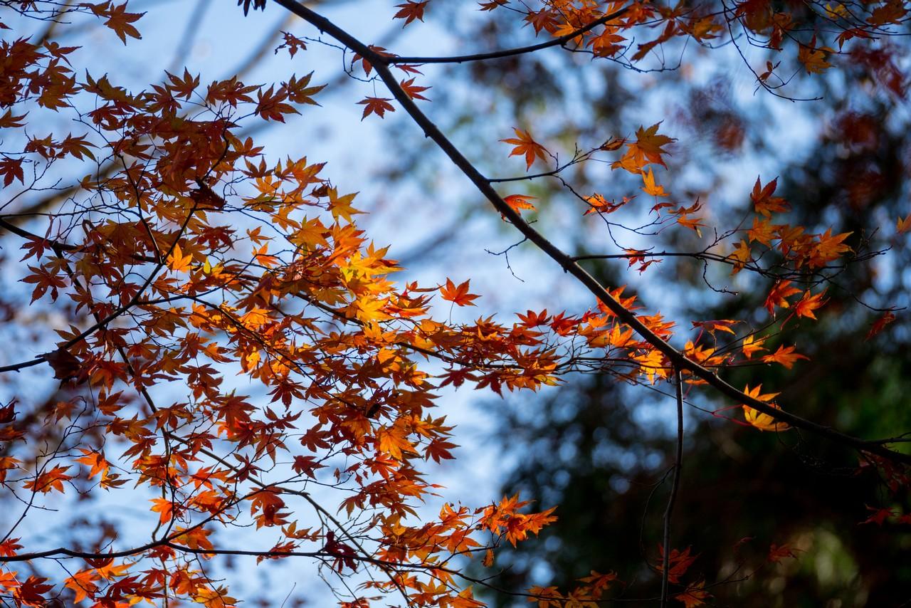 201223北高尾山稜-071
