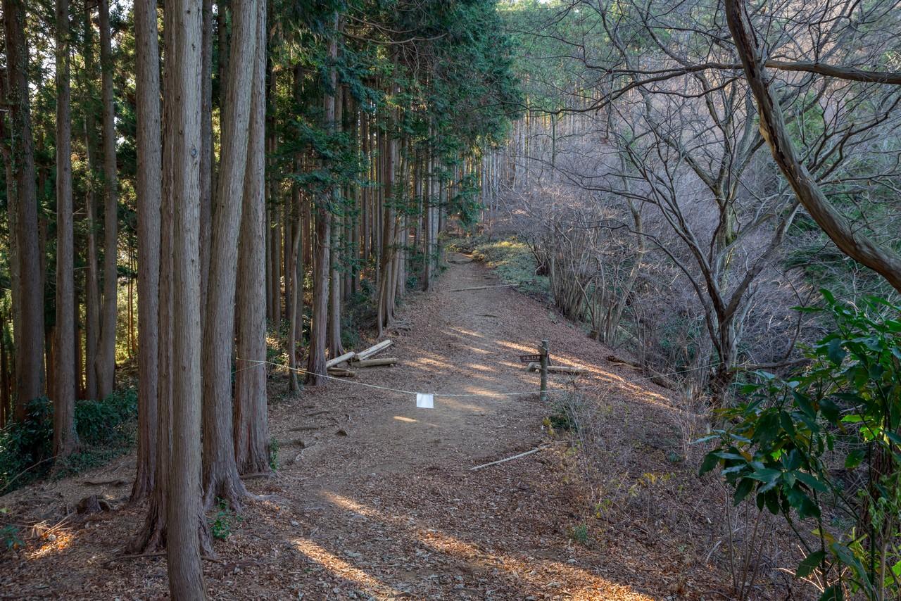 201223北高尾山稜-074