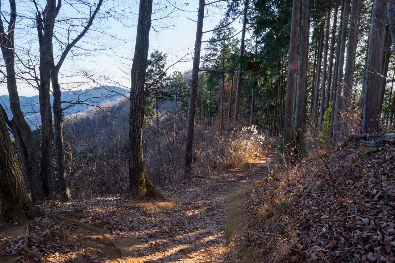 201223北高尾山稜-082