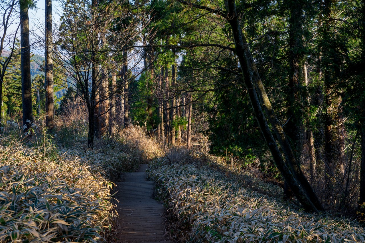 小仏城山の木道