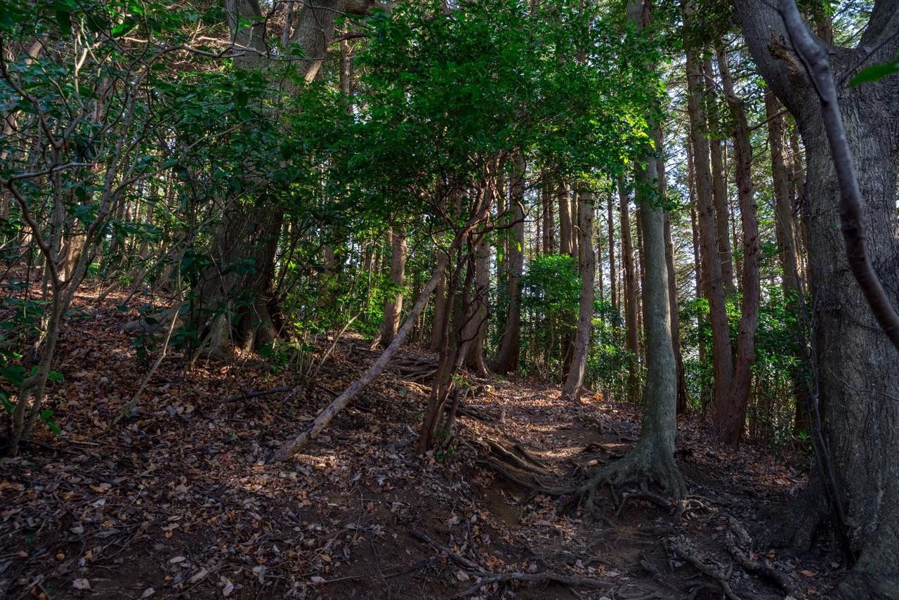 箱根 塔ノ峰の登山道