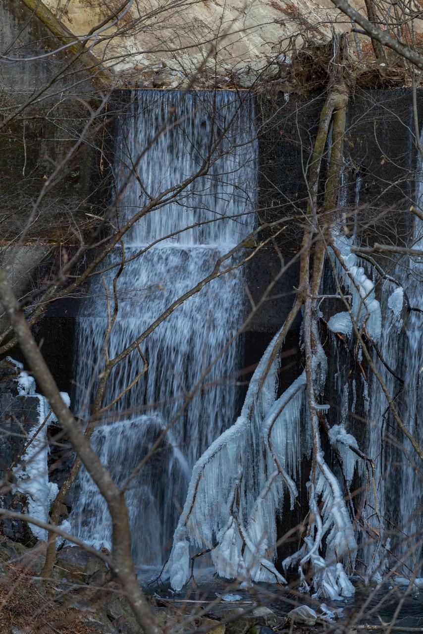 凍結した倒木