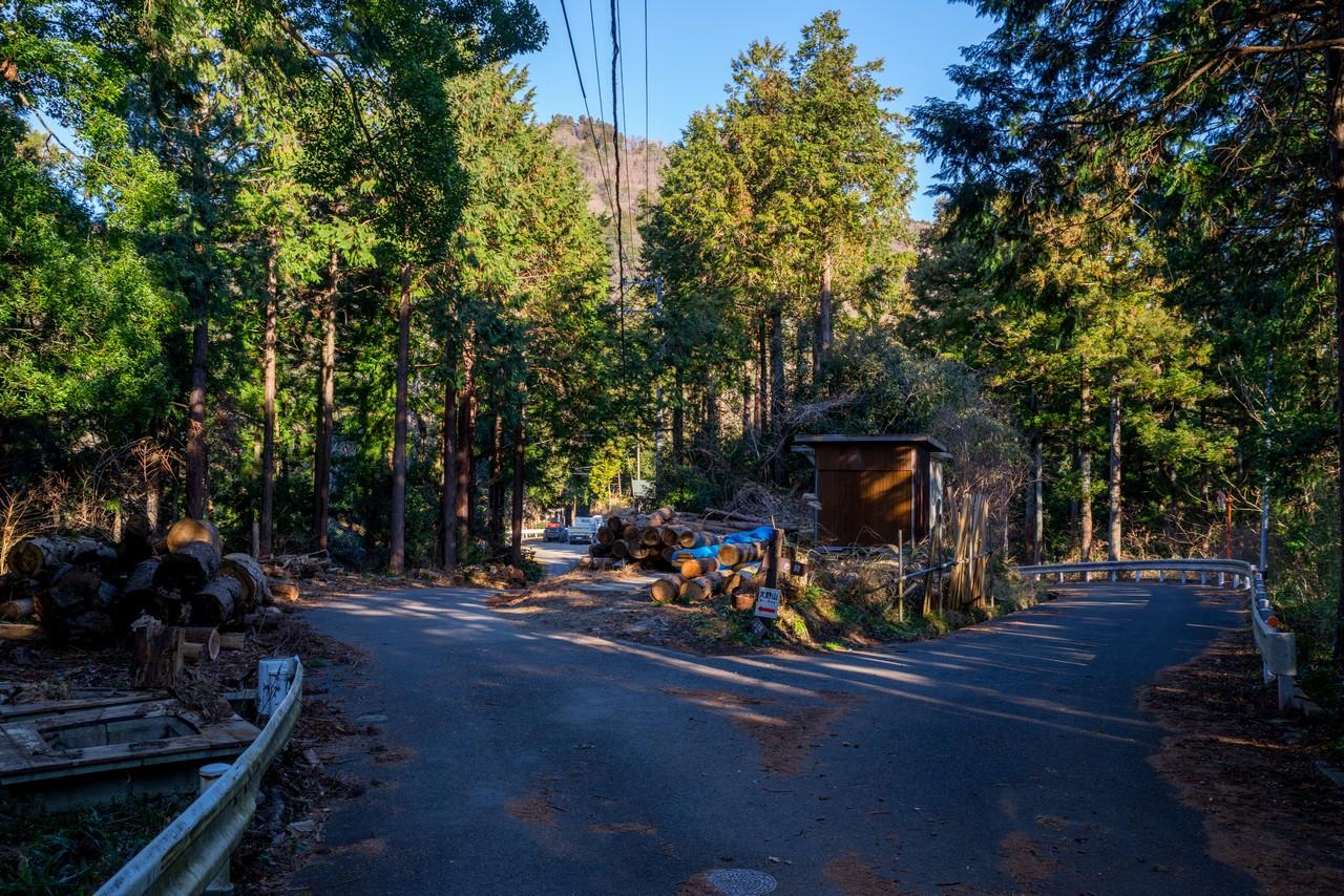 山北町 共和地区の山道