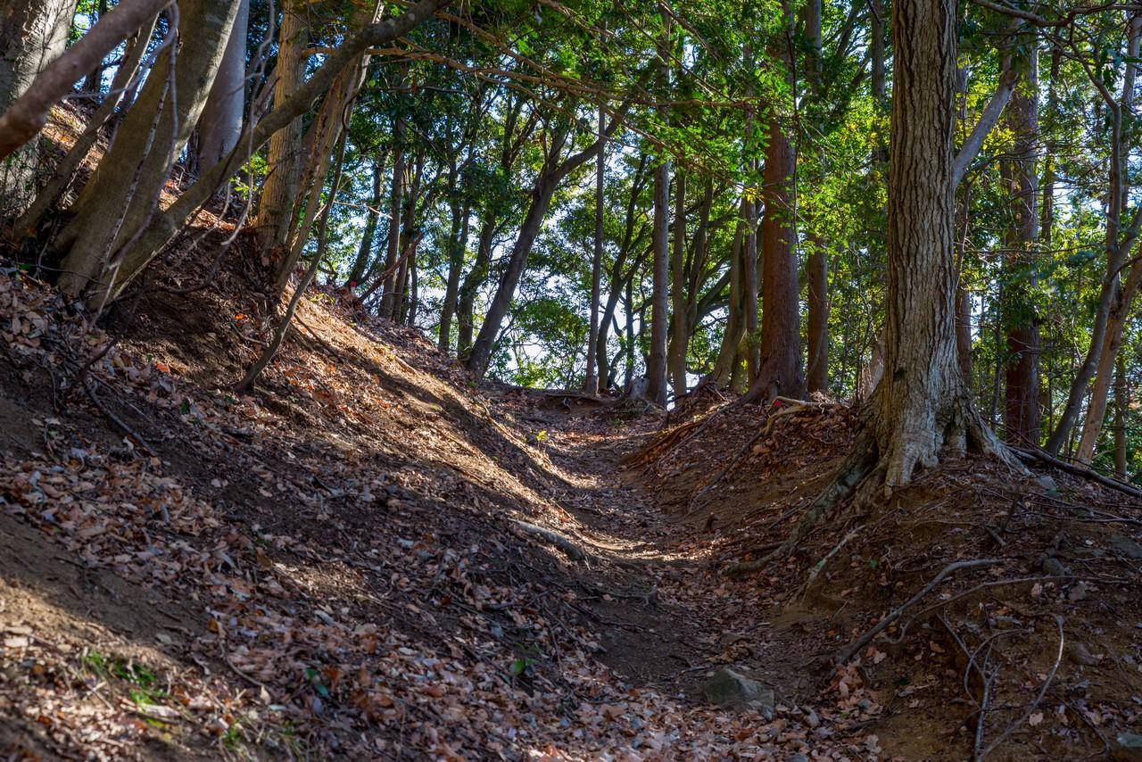 大野山 地蔵岩コースの登山道