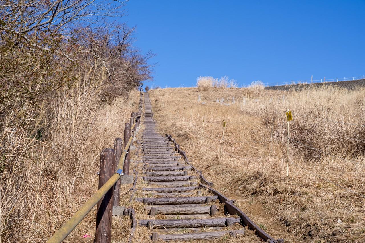 大野山のカヤトの斜面