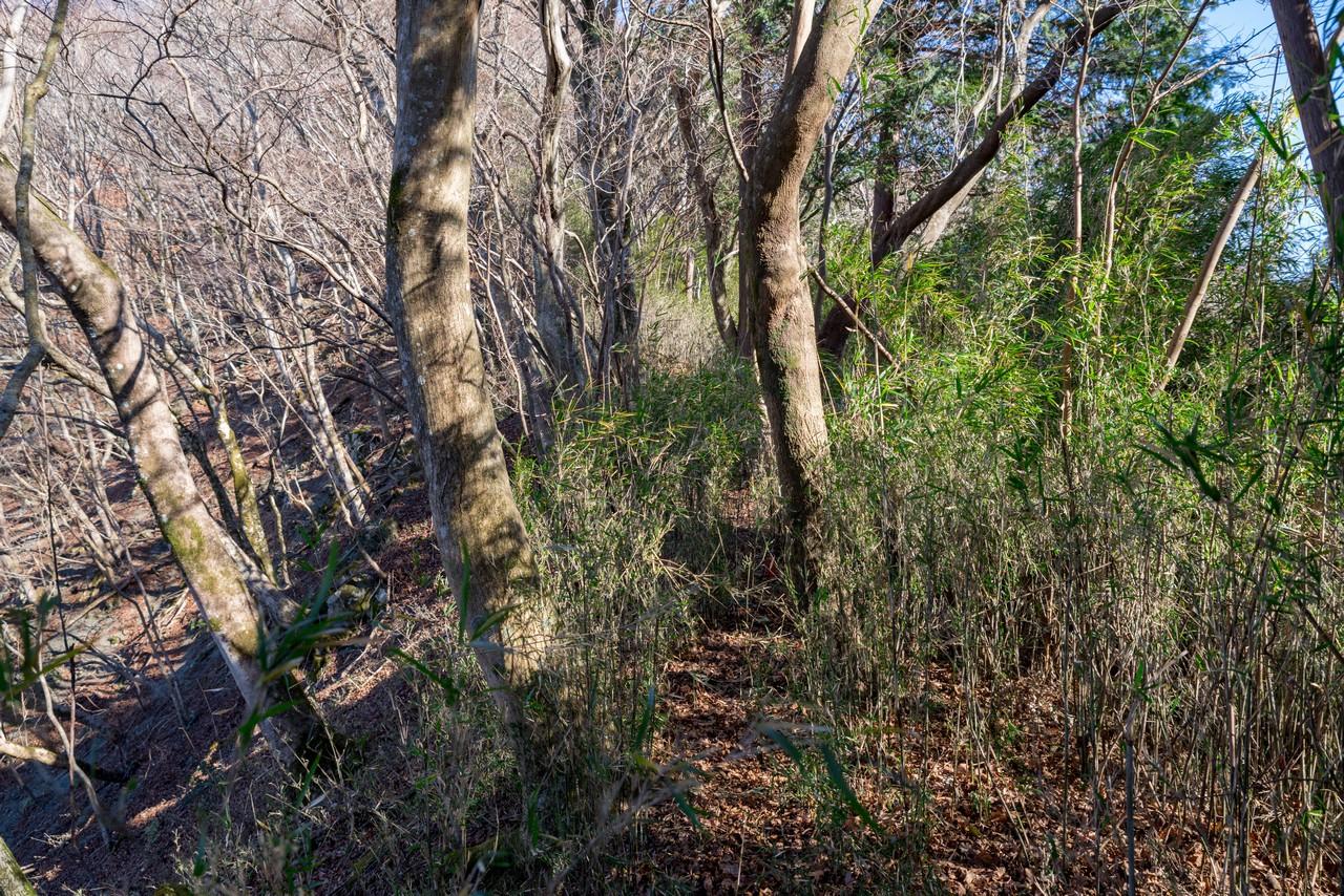 日影山の笹薮