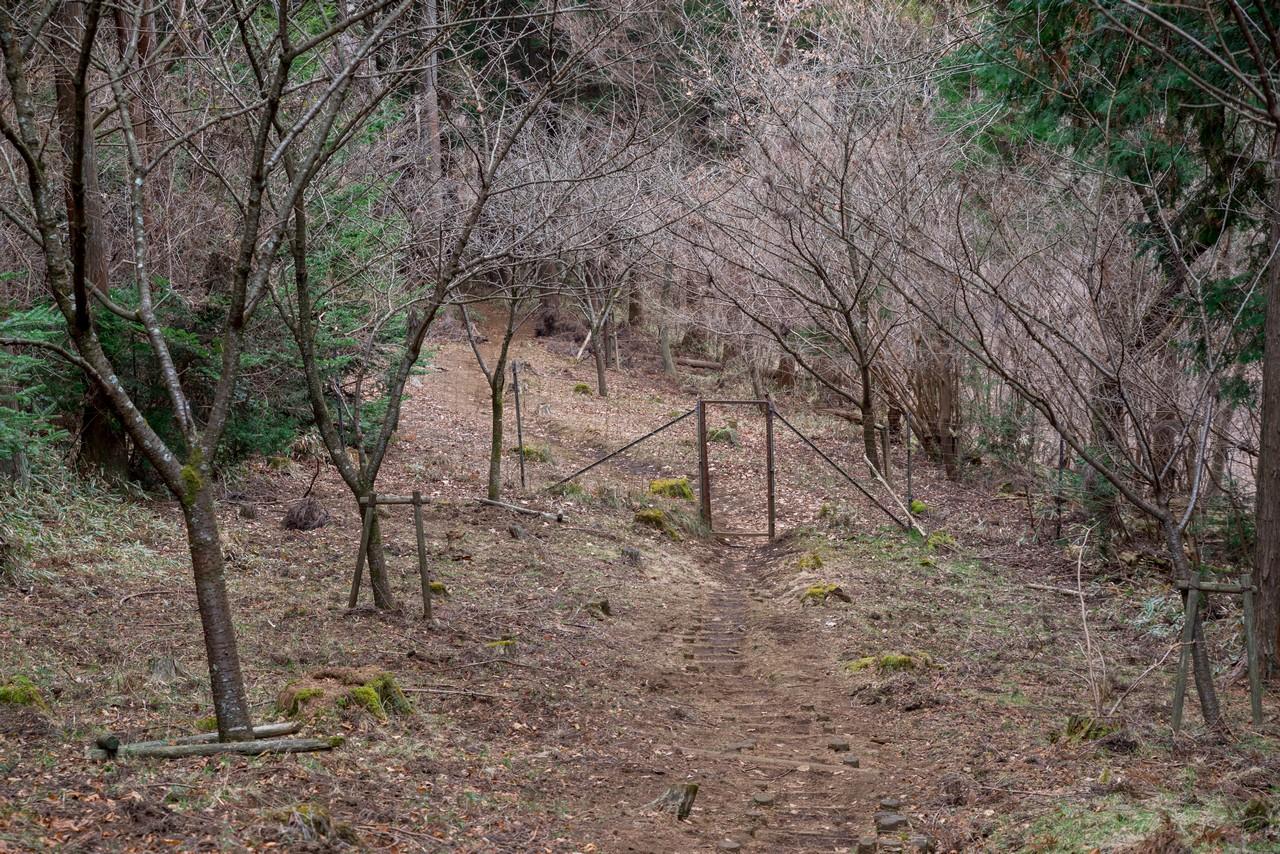 南山の登山道