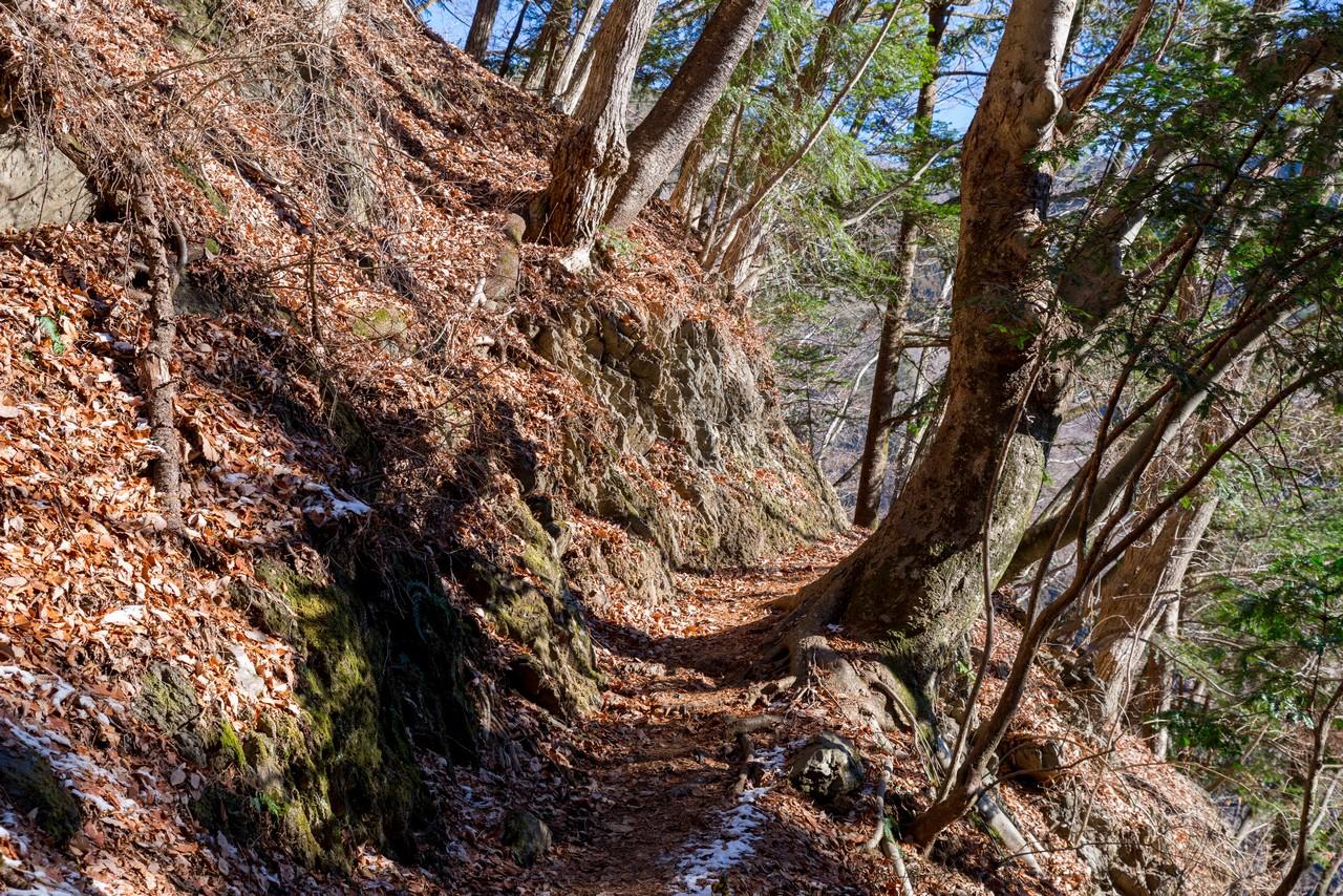 鴨沢ルートの登山道