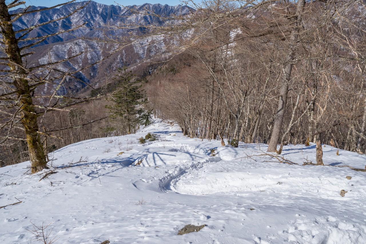 七ツ石山から見たブナ坂