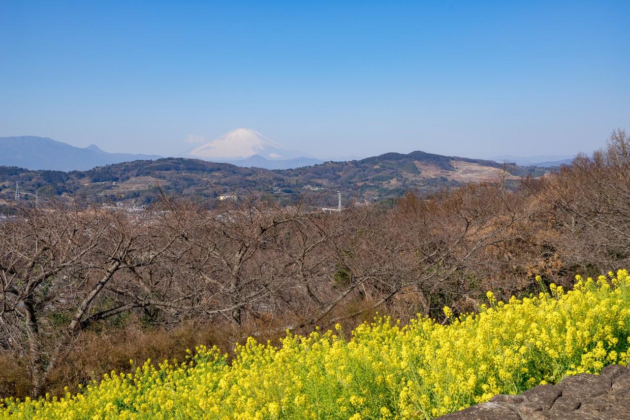 吾妻山公園から見た曽我丘陵