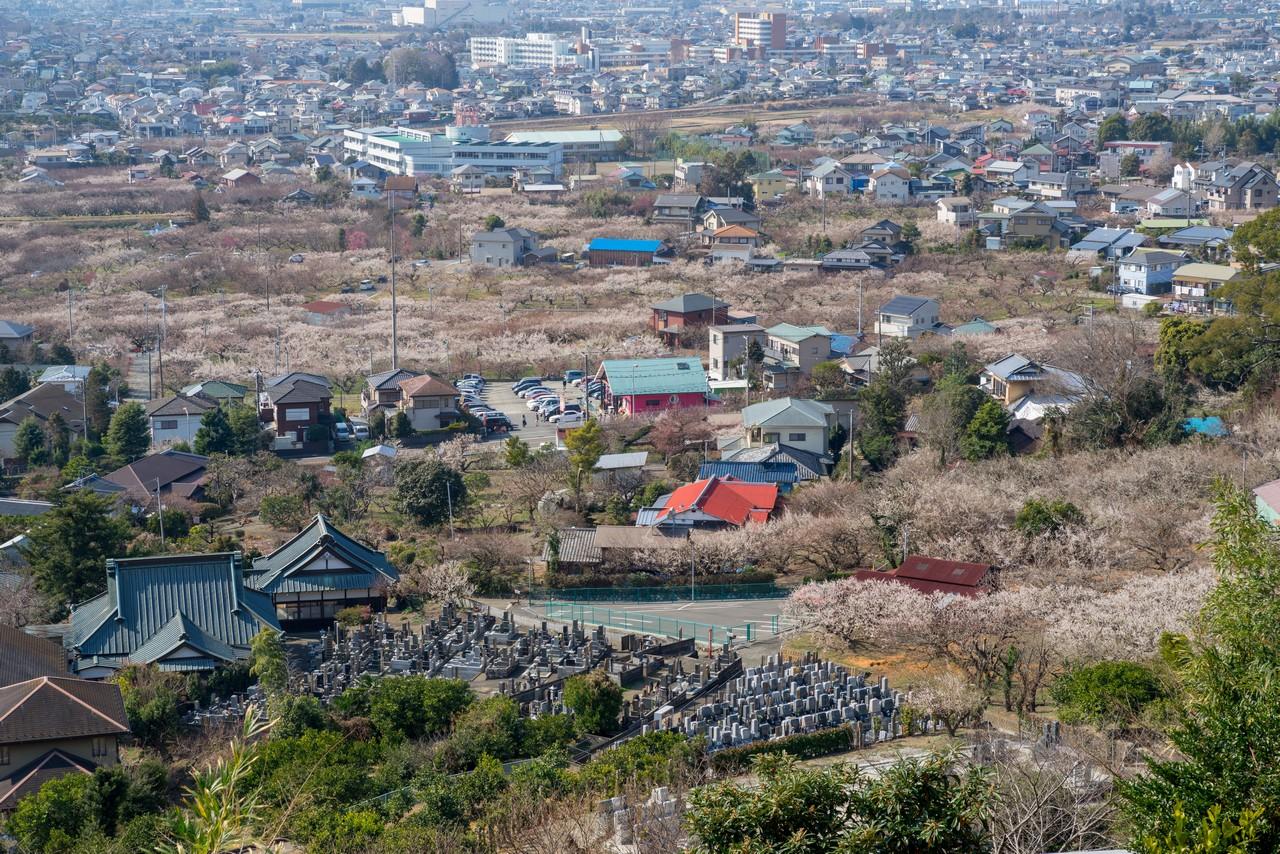 曽我丘陵から見た別所梅園