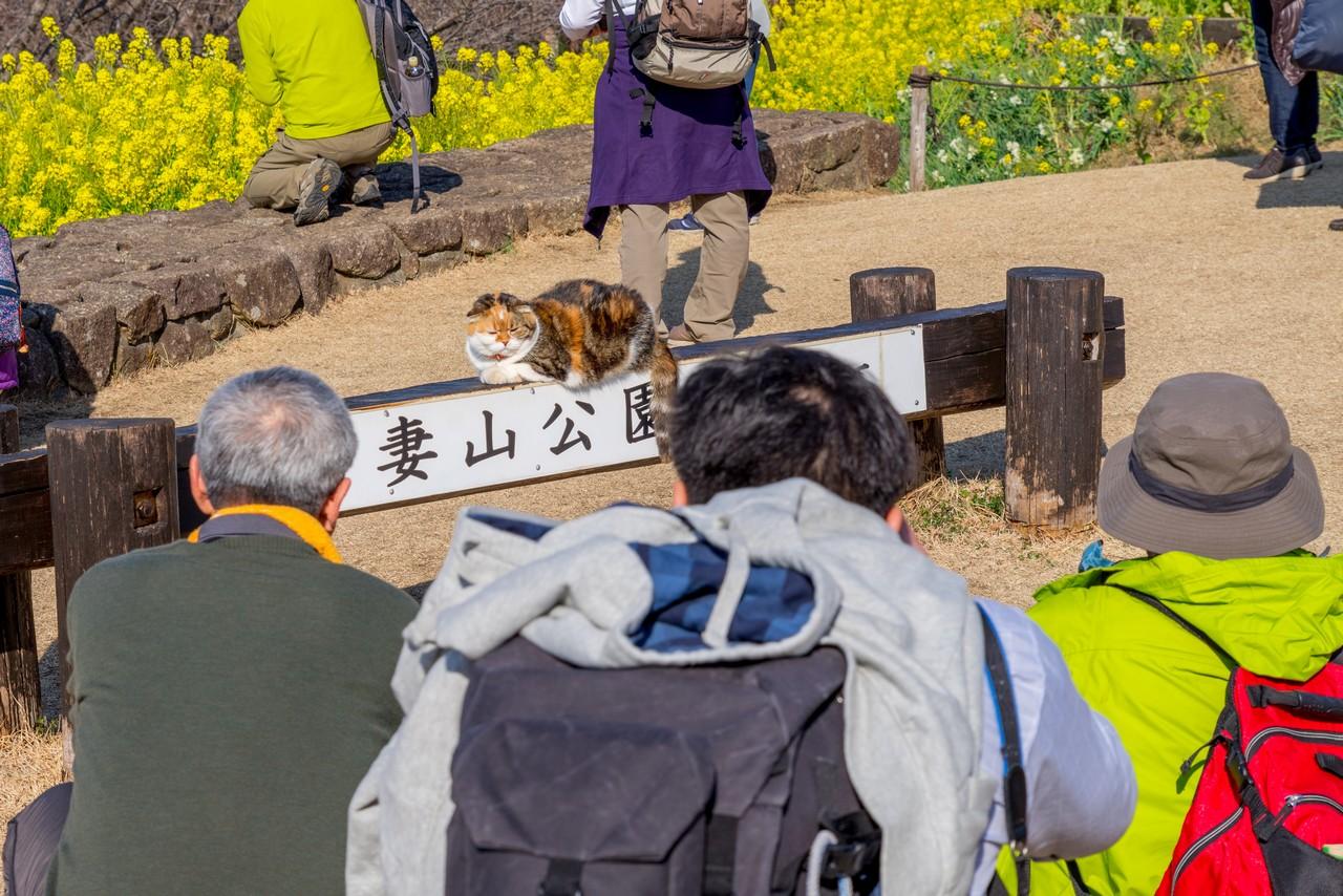 吾妻山公園の猫