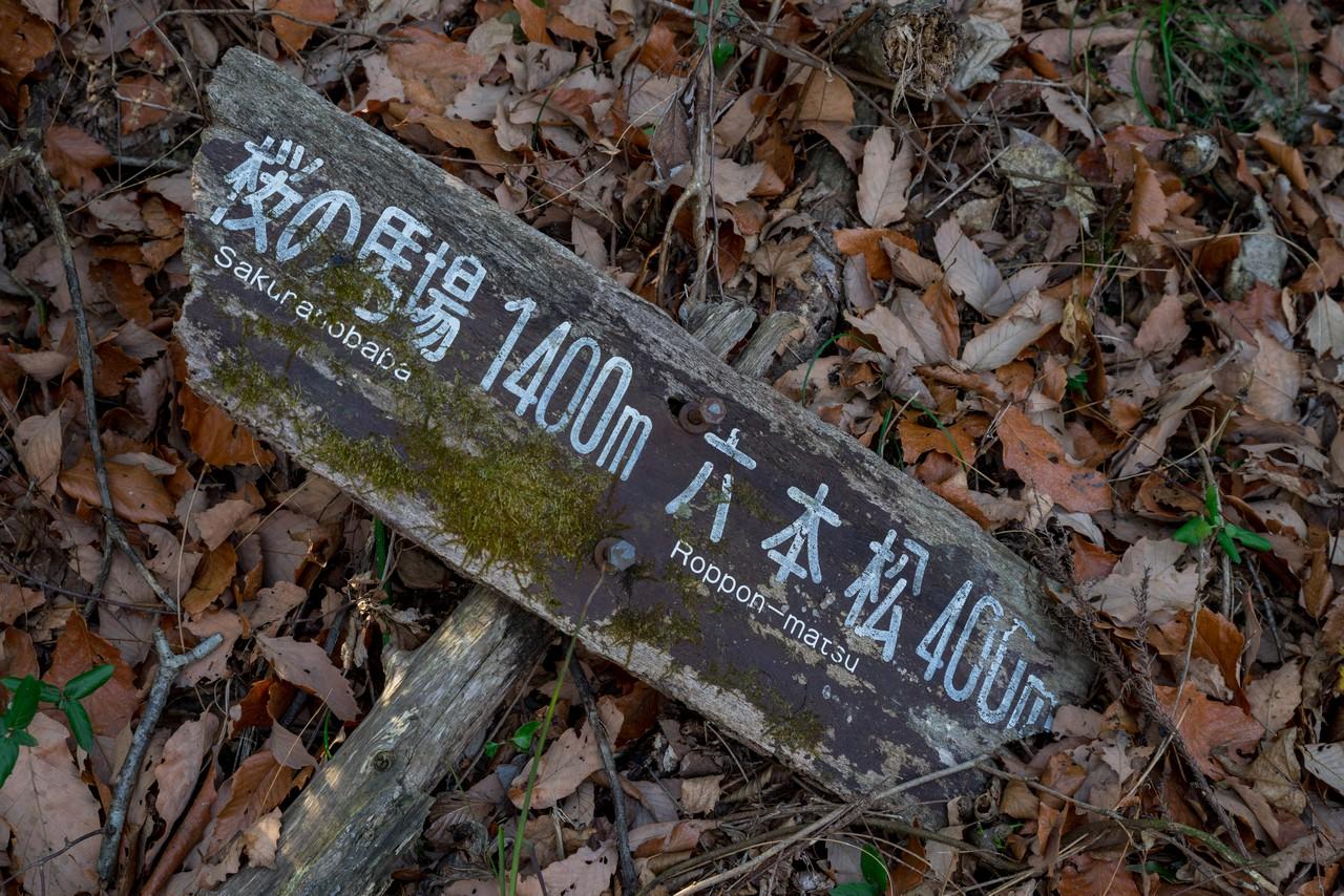 210207曽我丘陵-066