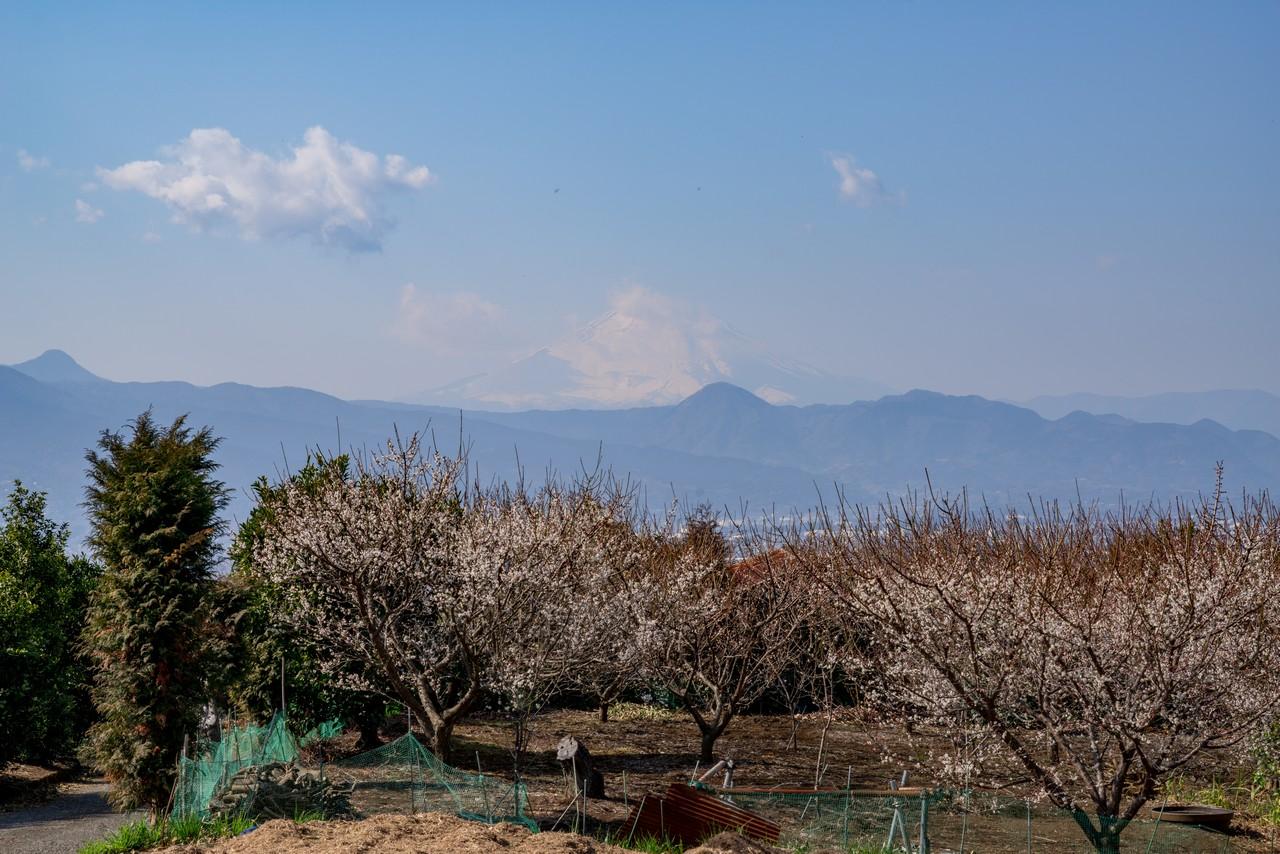 曽我丘陵から見た富士山