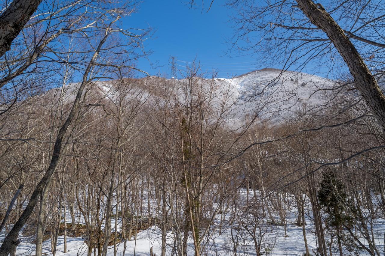 林道から見た松手山コース