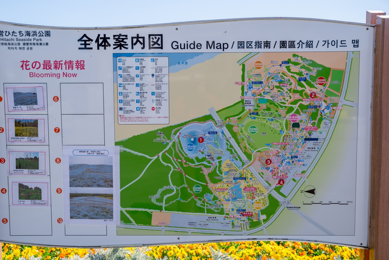 210426ひたち海浜公園-003