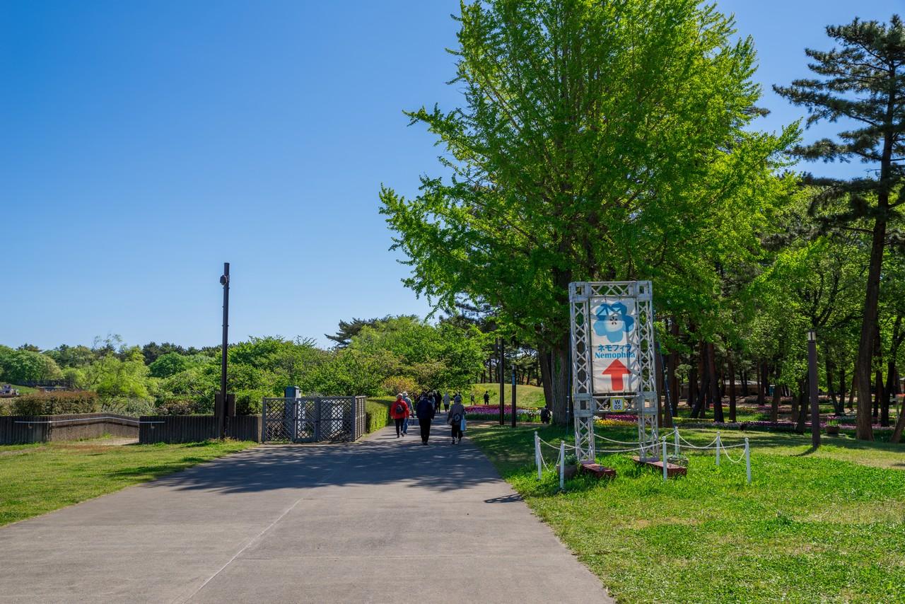210426ひたち海浜公園-017
