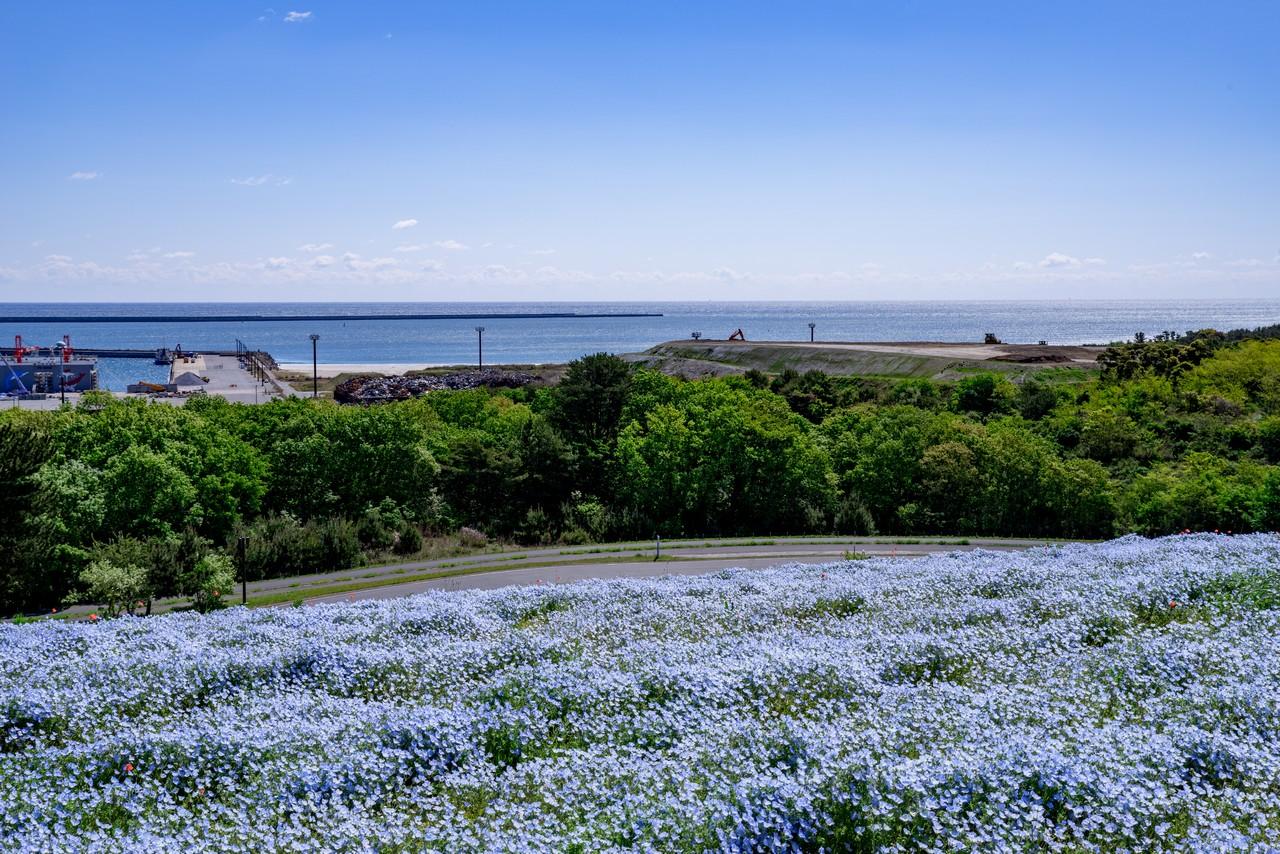 210426ひたち海浜公園-034