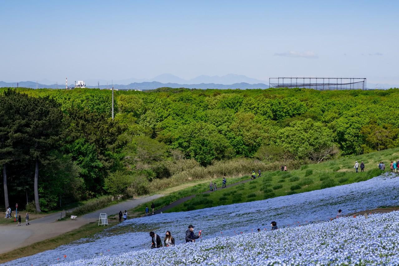 210426ひたち海浜公園-036