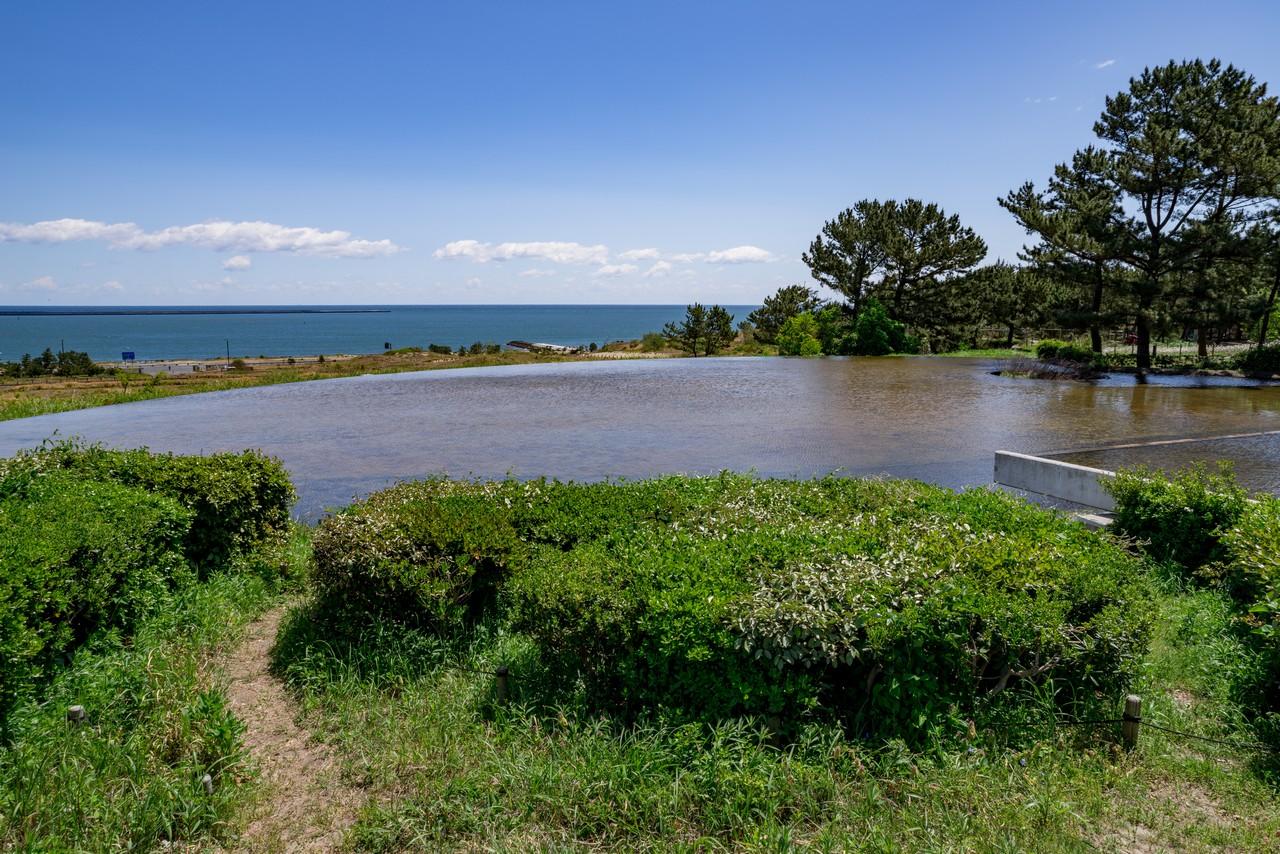 210426ひたち海浜公園-047