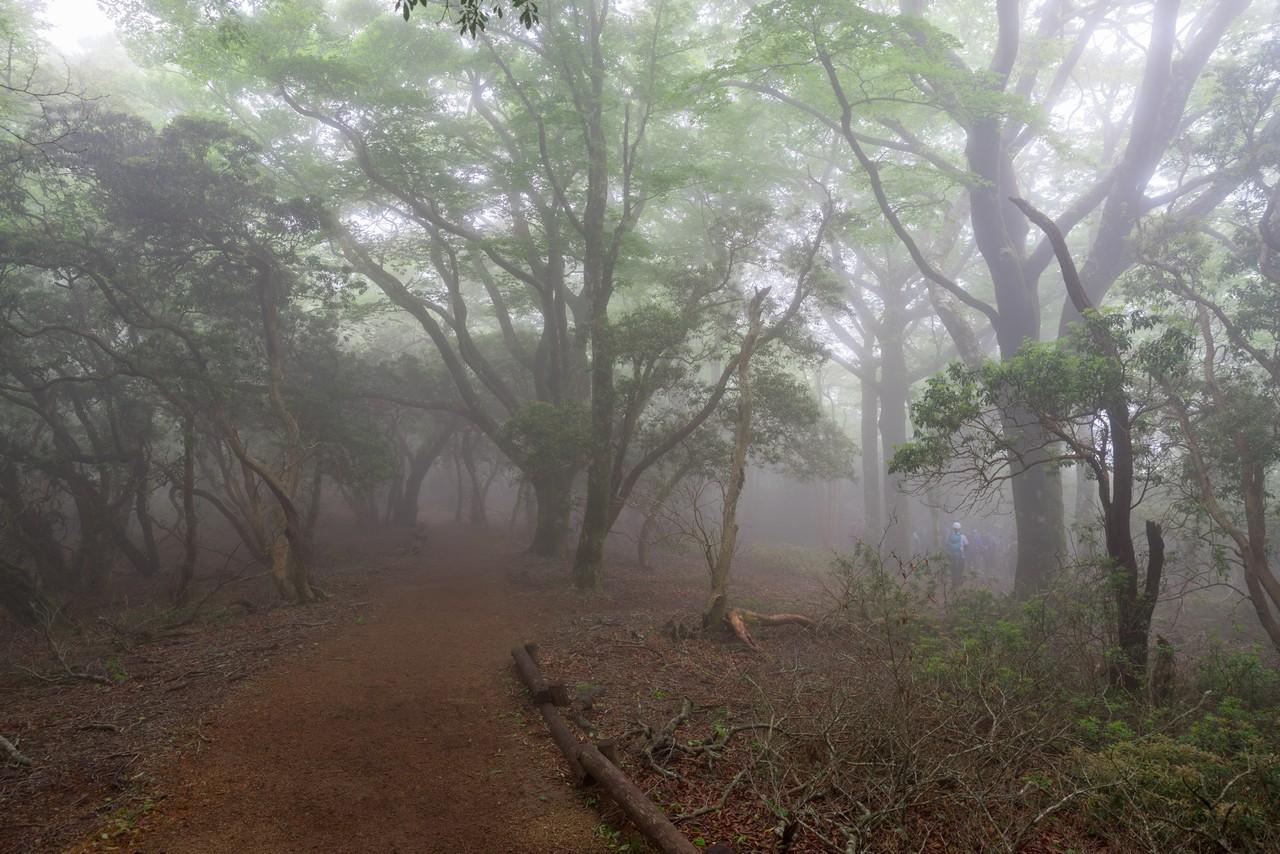 霧に覆われた天城山の森