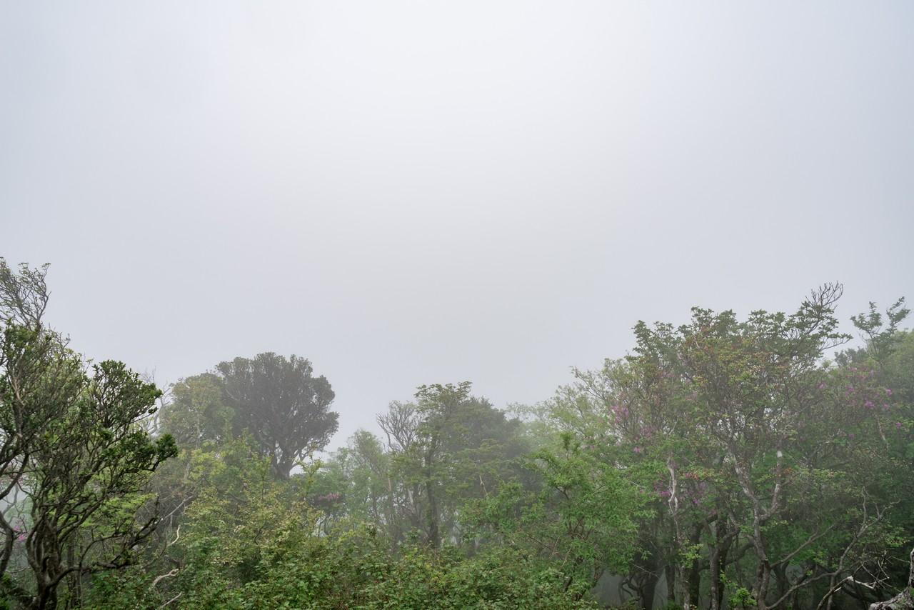 万二郎岳の山頂1