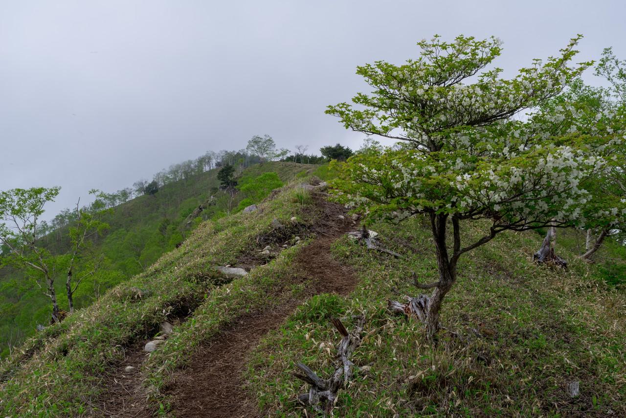 210604黒檜岳-038