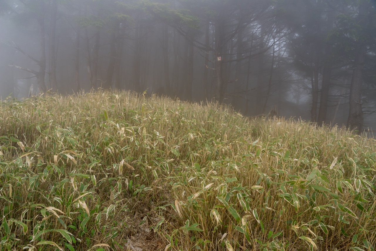 210604黒檜岳-065