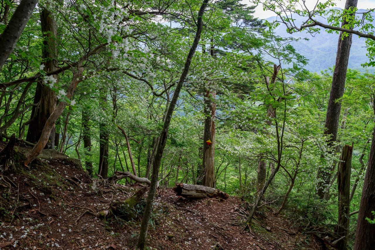 210604黒檜岳-082