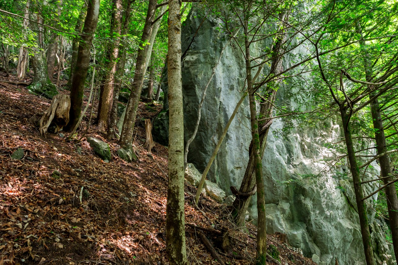 タワ尾根の石灰岩