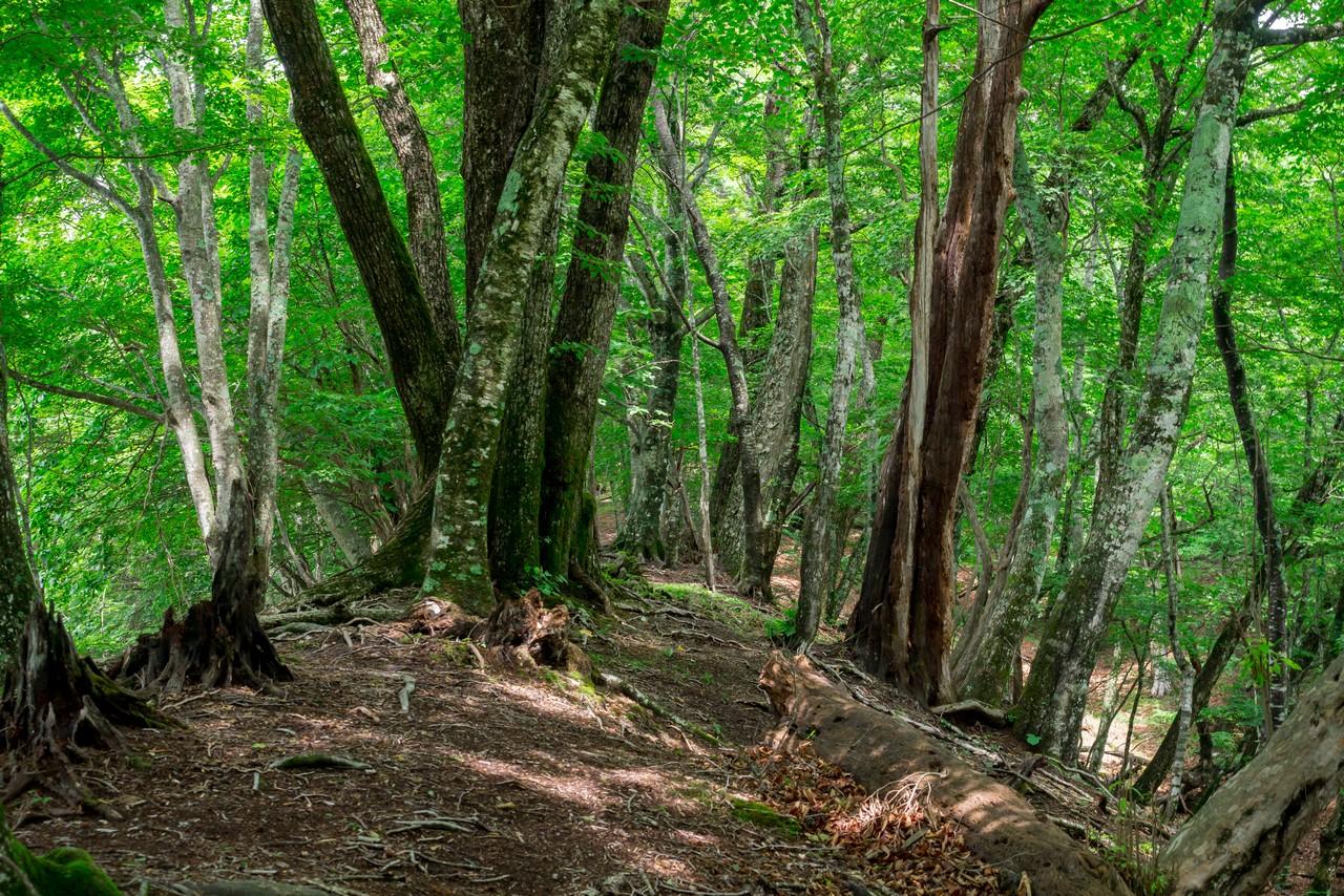 タワ尾根の登山道