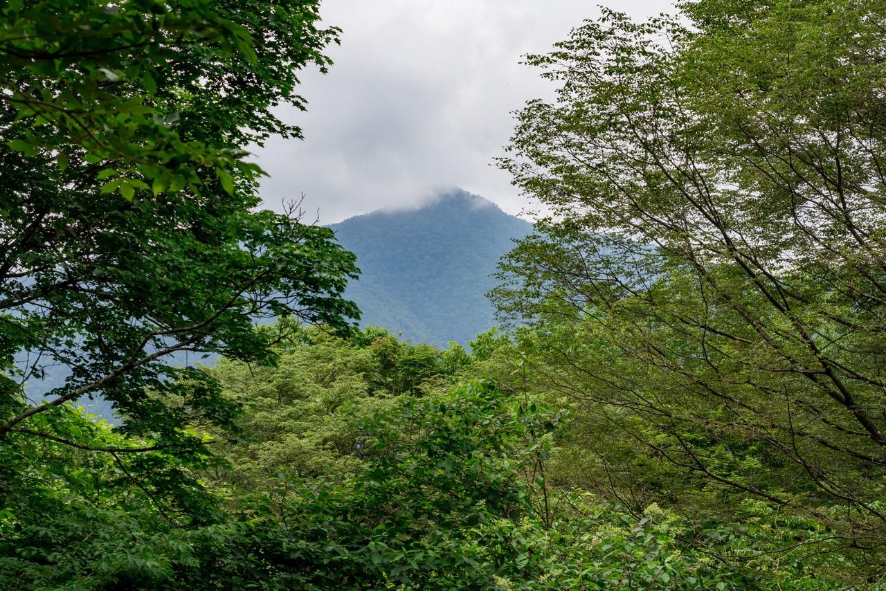 タワ尾根から見た天祖山