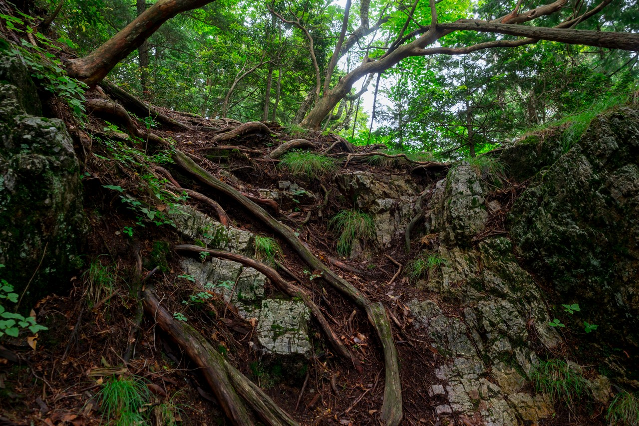 タワ尾根の岩場