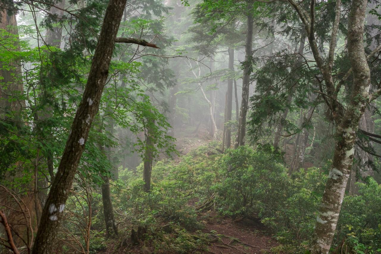 霧のタワ尾根