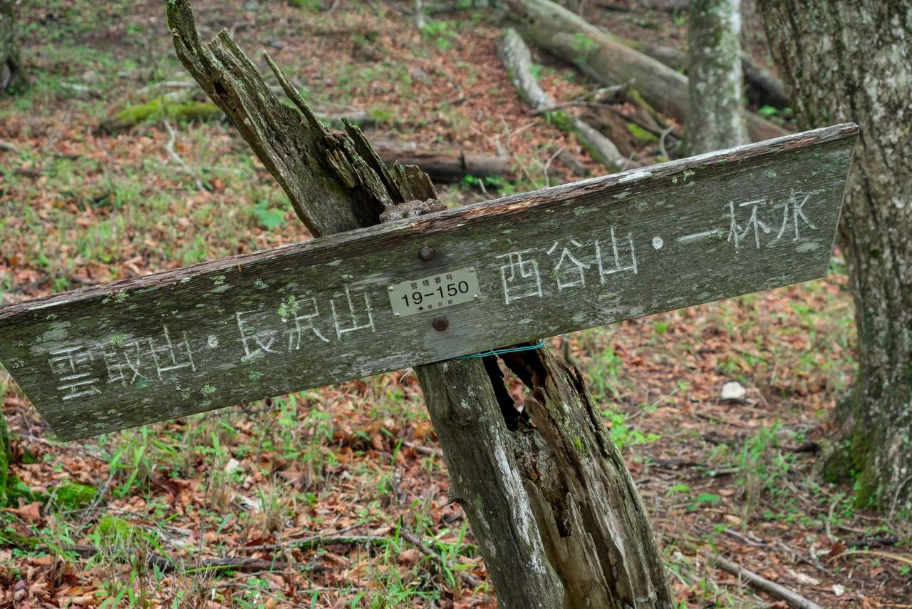 長沢背稜のタワ尾根の分岐地点