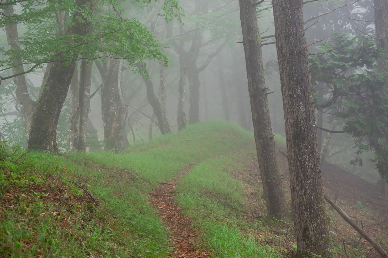 長沢背稜の登山道