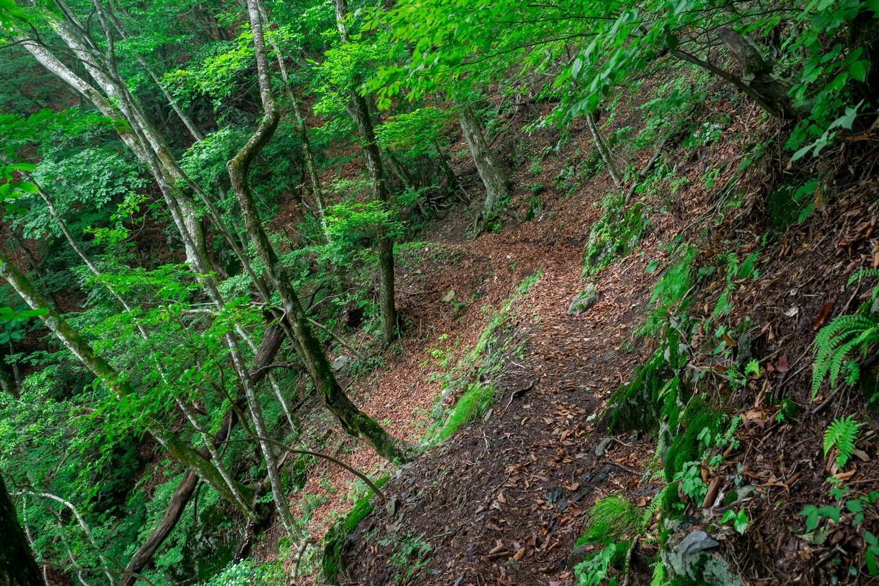 ヨコスズ尾根の登山道