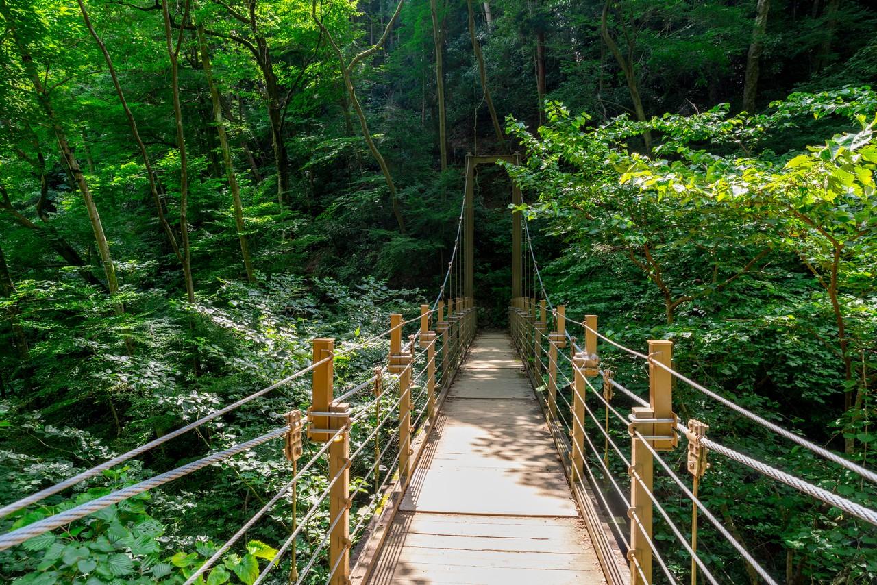 高尾山 4号路の吊り橋