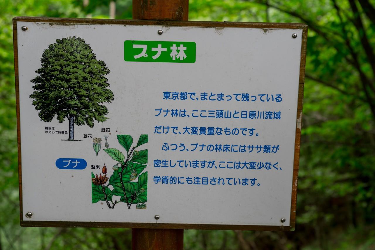 210821檜原村滝巡り-015