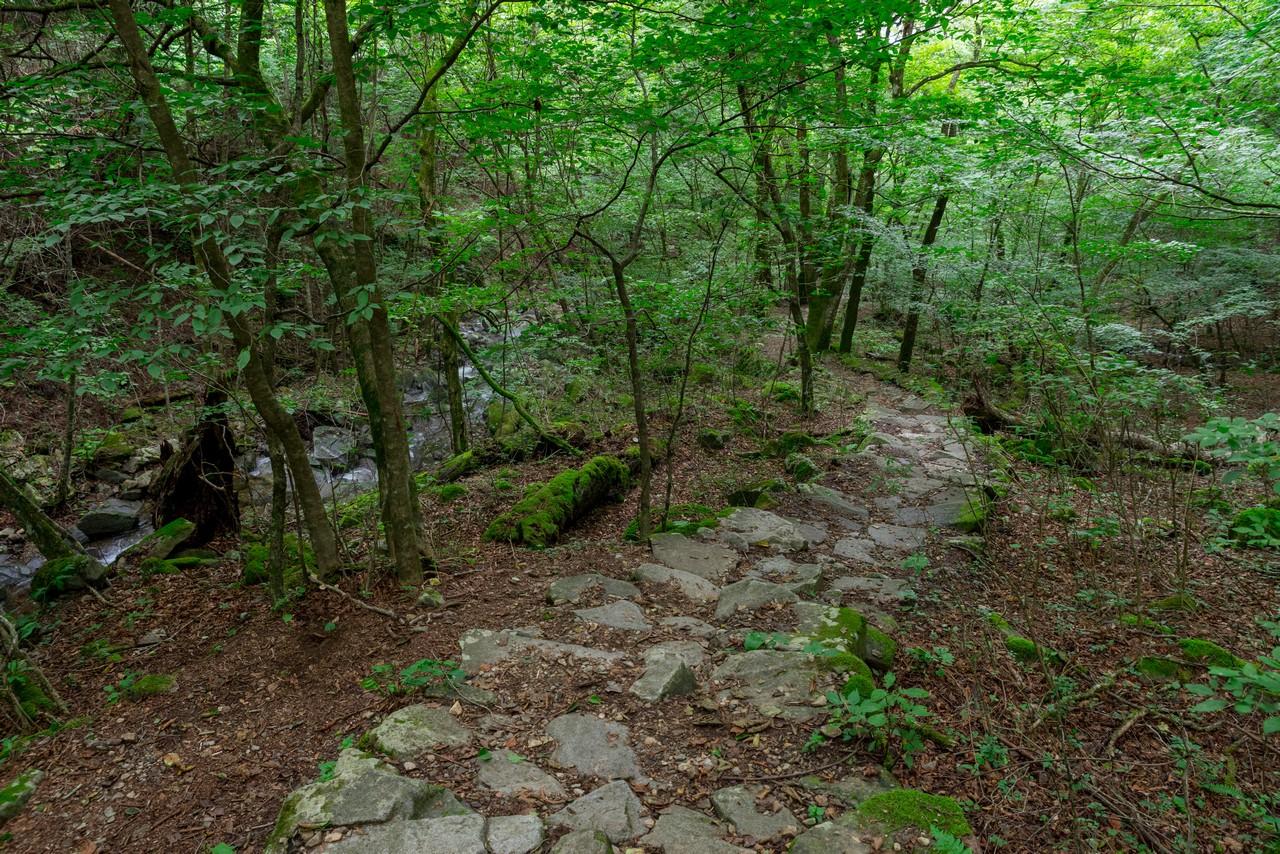 210821檜原村滝巡り-025