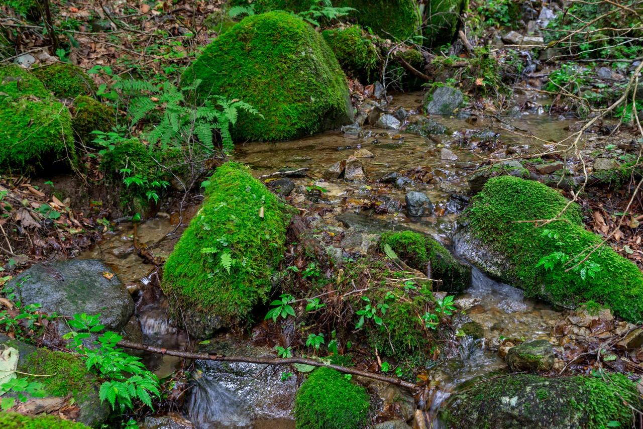 210821檜原村滝巡り-026