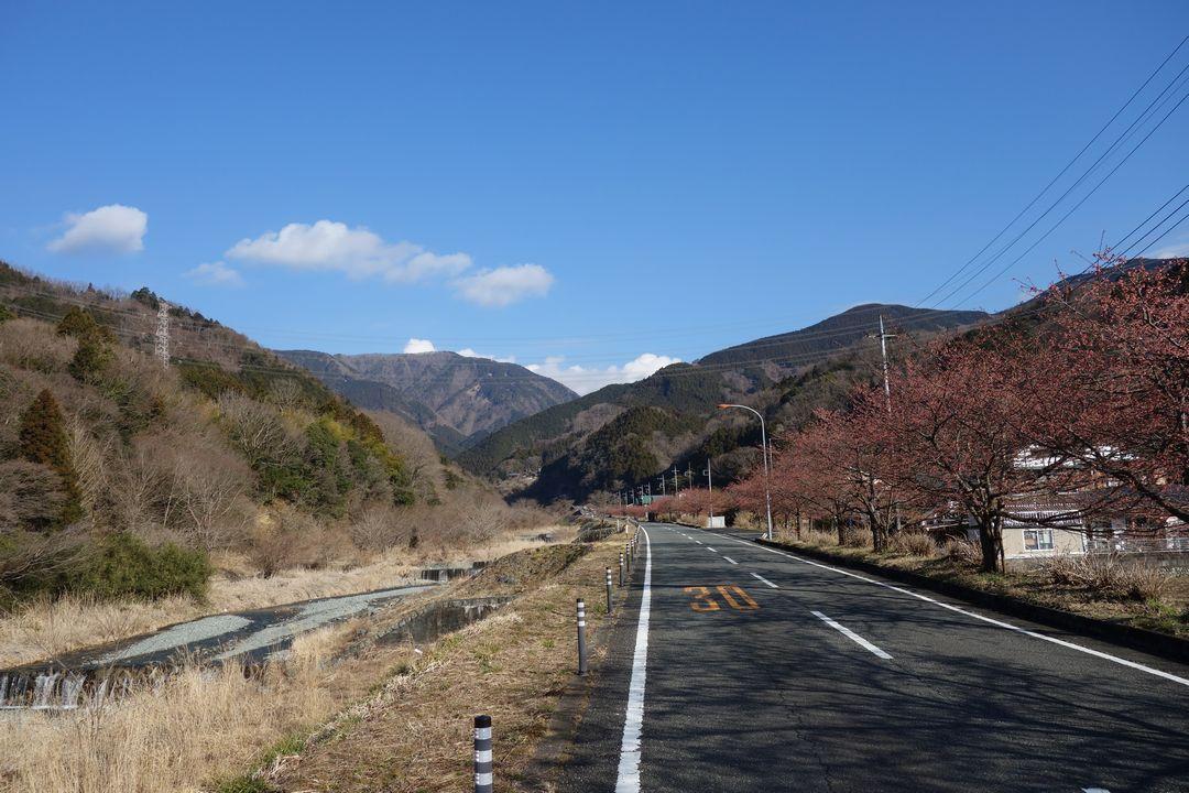 寄集落の沿道風景