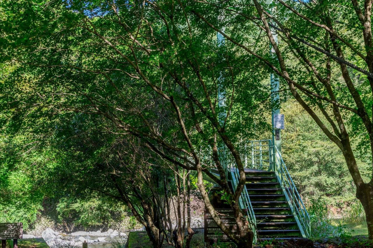 西丹沢ビジターセンターの吊り橋