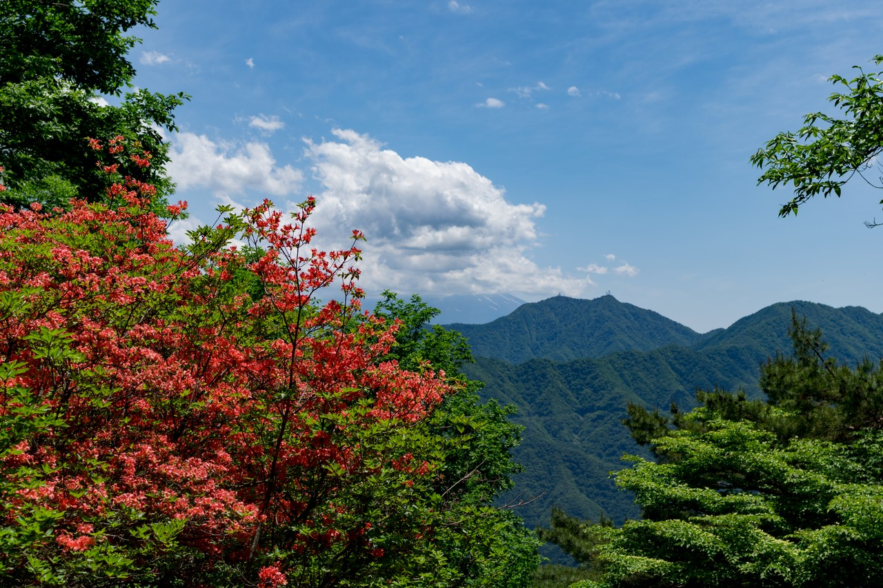 170603滝子山_064