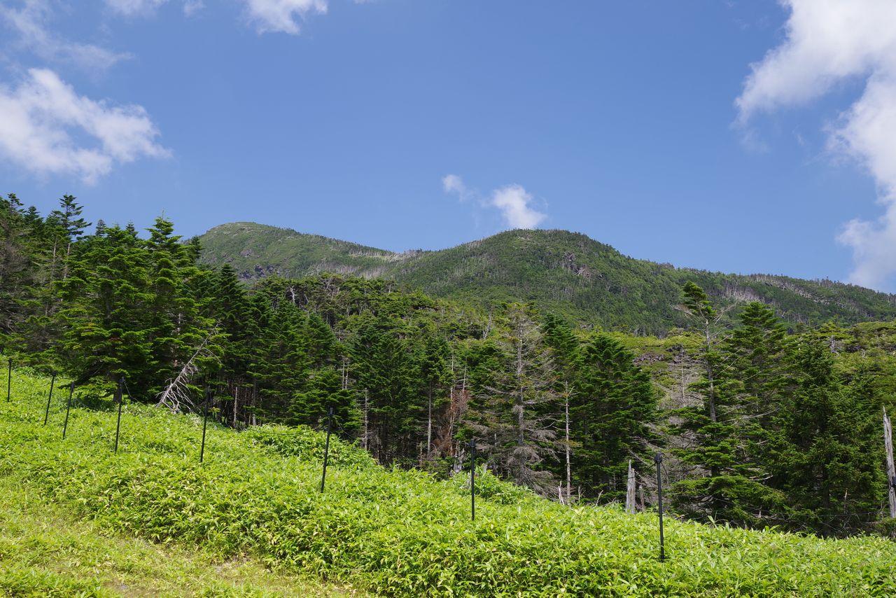 坪庭から見た北横岳
