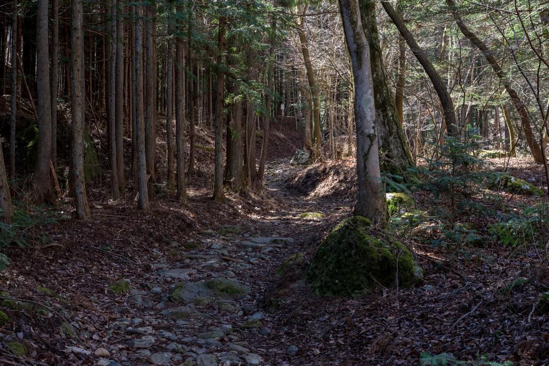 190324倉岳山_025